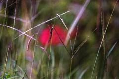 秋の草(写真句)
