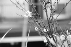 返り花(写真句)