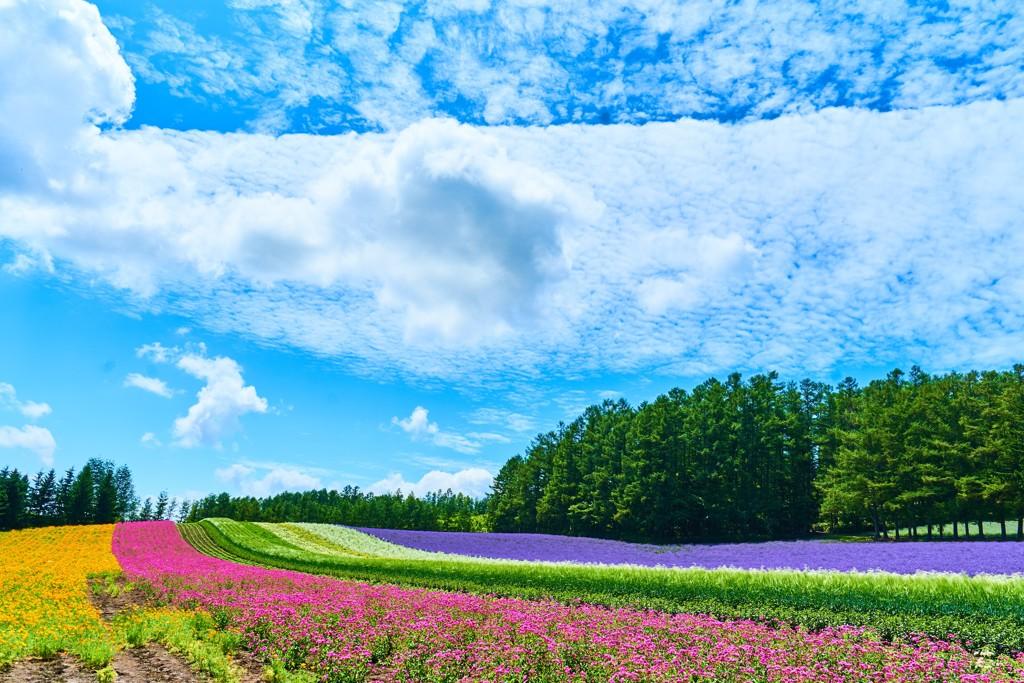 ファーム冨田~彩りの畑
