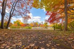 中島公園の紅葉 そのに。