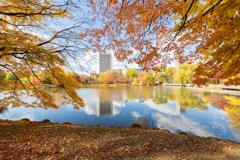 中島公園の紅葉 そのいち。