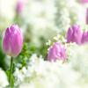 春 ~出会いの季節~