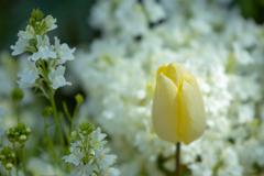 春 ~別れの季節~