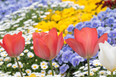 カラフル花壇♪