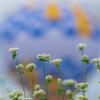 椛の湖そばの花まつり2019