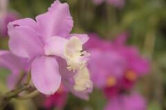 初めての場所~咲くやこの花館~