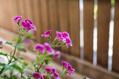 ベンチ裏のお花♡