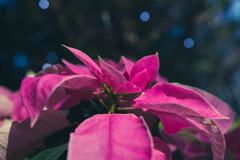 クリスマスを待つ植物園