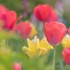春…満喫♡