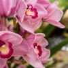 癒しをくれるお花たち