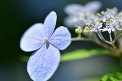 花…開く♡