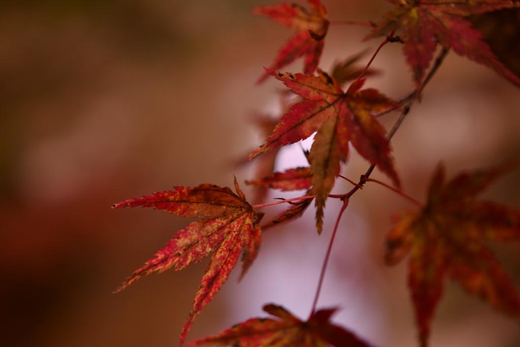 秋を感じて♪
