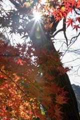 愛岐トンネル群の紅葉