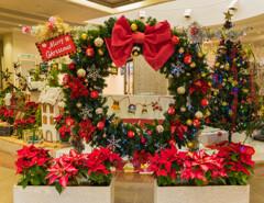 クリスマスを待つ植物園②