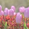 ♡春の日♡