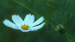 秋の付く花4