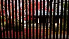 法隆寺と紅葉