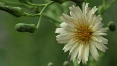 秋の付く花3