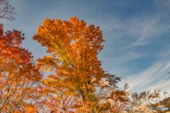 残秋のうた