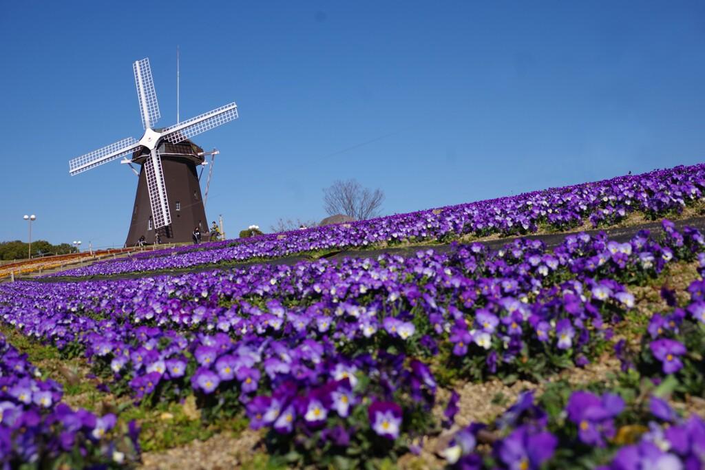 春の風車の丘