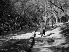 木洩れ日の坂道