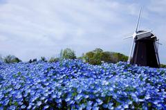午後の青い風景