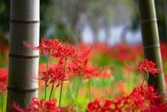 狂い咲き狂い撮り @浜松市天竜区 玖延寺 1