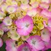 梅雨の花 その2