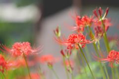 狂い咲き狂い撮り @浜松市天竜区 玖延寺 4