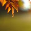 今年も近所に秋がキました。 3