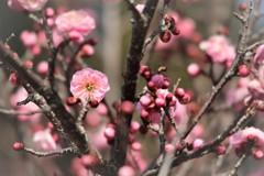 春呼ぶ花 Ⅲ