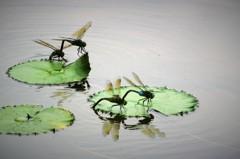 蜻蛉達 5