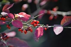 秋を彩る実
