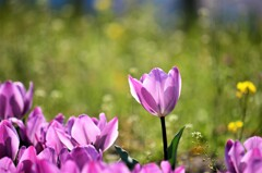 春日を浴びて咲く