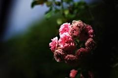 枯れかけの花束