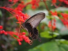 花と蝶 2