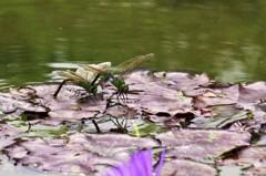 蜻蛉達 2
