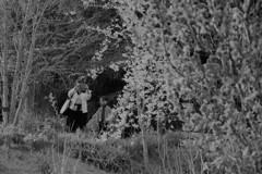 幼い心に残る桜