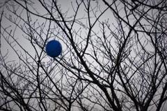木にかかった青い風船