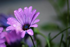 妻が咲かせた花