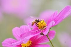 蜜に誘われ香りに誘われ
