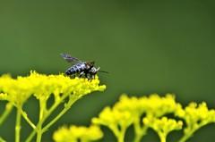 幸せを運ぶ青い蜂