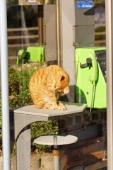 電話ボックスの中は暖かいニャア