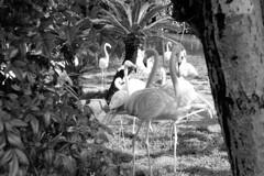 フラミンゴの休息
