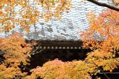 寺院色づく