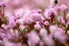 ピンクの粒