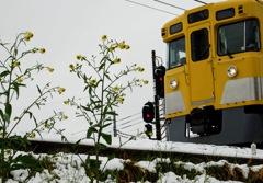 黄色い小花と黄色い電車