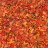 秋色絨毯 紅