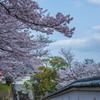 龍野城 桜2017