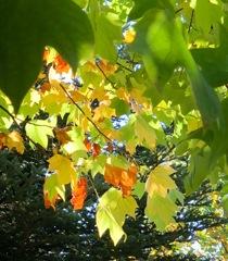 優しい秋の彩り…